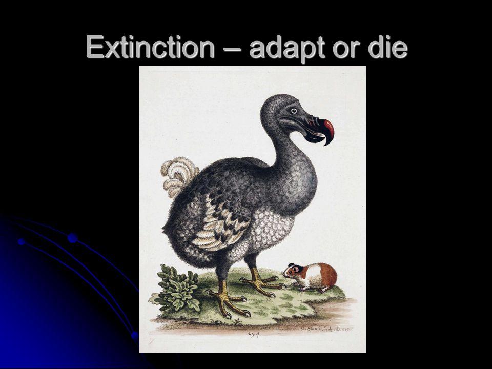 Extinction – adapt or die