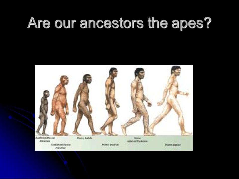 Are our ancestors the apes