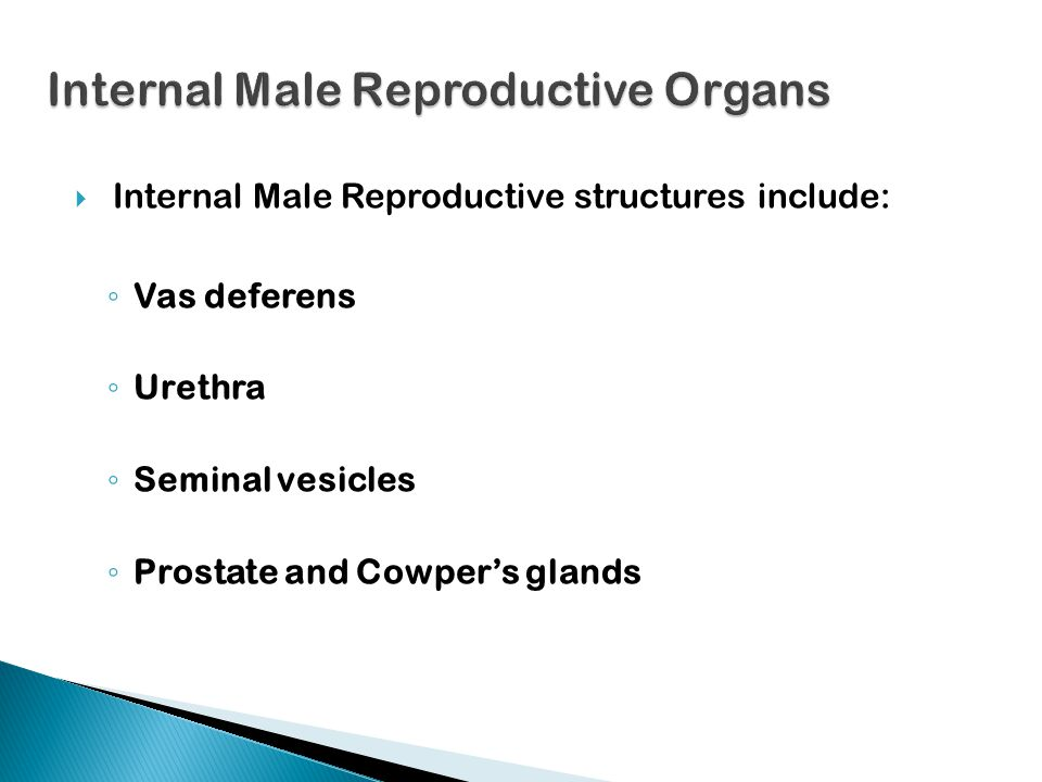  Ejaculation occurs (release of semen from the penis)  As many as 300-500 million sperm are released.  Fertilization-joining of a male sperm cell a
