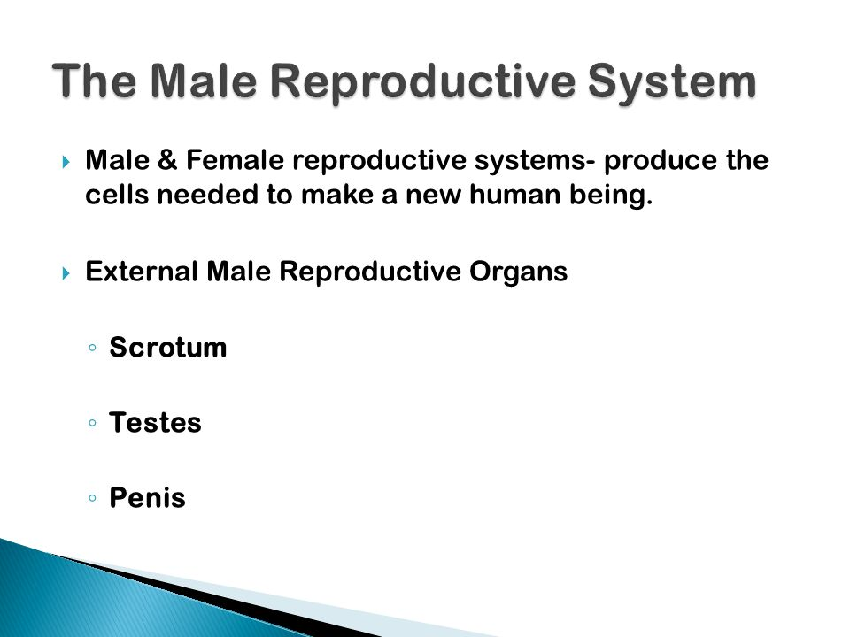  Male & Female reproductive systems- produce the cells needed to make a new human being.