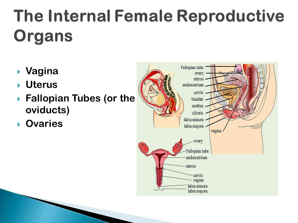  The vaginal opening lies between the labia minora and may be blocked by a thin membrane called the hymen.  Also, above the vaginal opening is the u