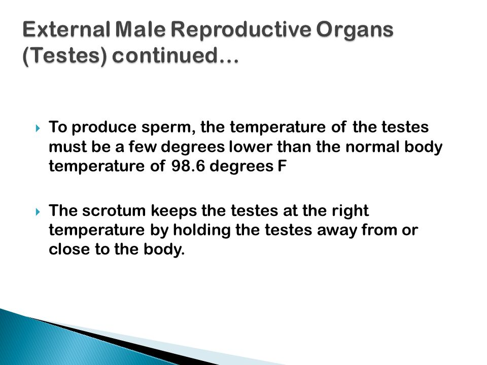  Uterus- is the organ that prepares each month to receive a fertilized ovum; also known as the womb  Its primary function is to hold & nourish a developing embryo & fetus  It will expand to hold a growing fetus  Has an inner lining called the endometrium, which provides attachment of the embryo