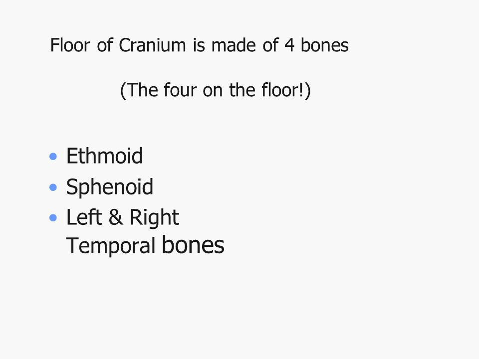 Floor of Cranium is made of 4 bones (The four on the floor!) Ethmoid Sphenoid Left & Right Temporal bones