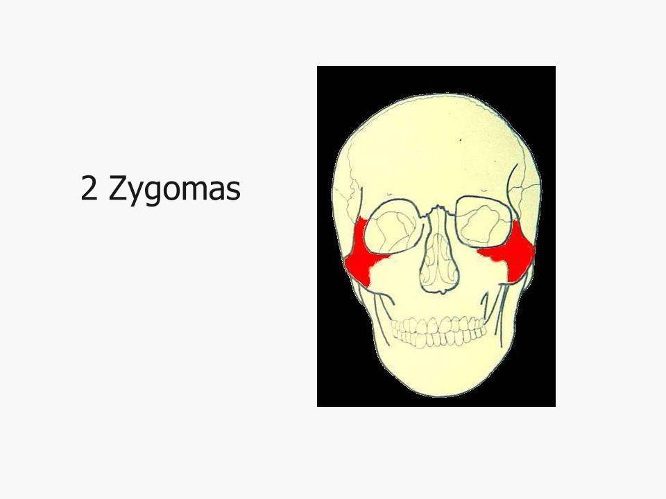 2 Zygomas