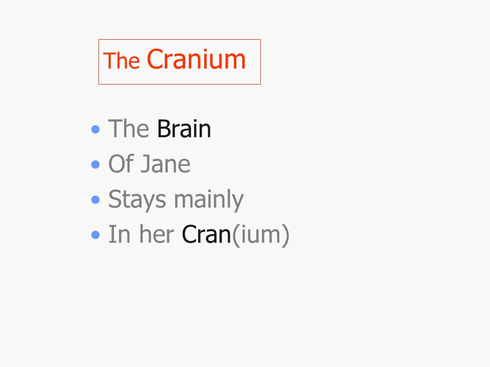 The Cranium The Brain Of Jane Stays mainly In her Cran(ium)