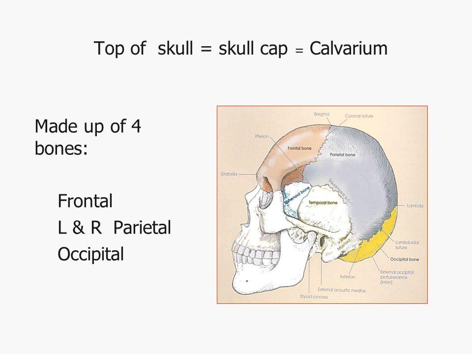 14 Facial Bones 2 maxillary bones 2 nasal 2 lacrimal 2 Zygoma (malar) 2 palatine 2 inferior nasal conchae 1 vomer 1 mandible