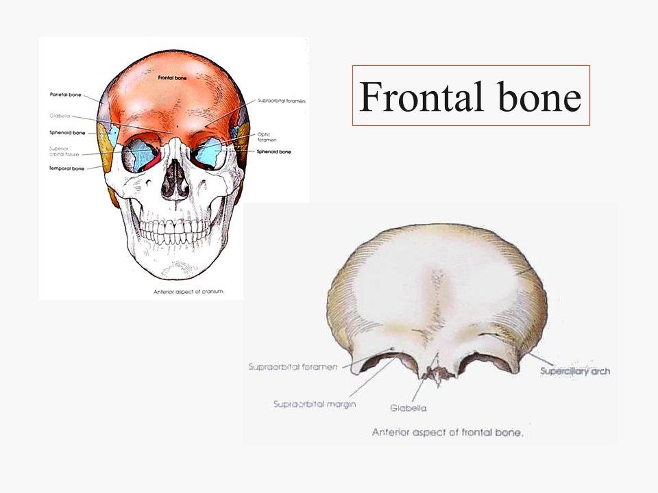 2 parietal bones