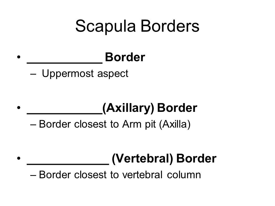 Scapula Borders ___________ Border – Uppermost aspect ___________(Axillary) Border –Border closest to Arm pit (Axilla) ____________ (Vertebral) Border