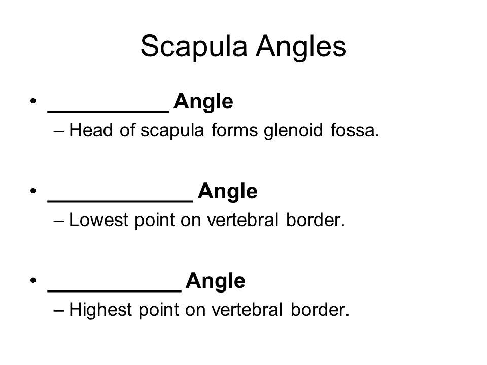 Scapula Angles __________ Angle –Head of scapula forms glenoid fossa. ____________ Angle –Lowest point on vertebral border. ___________ Angle –Highest