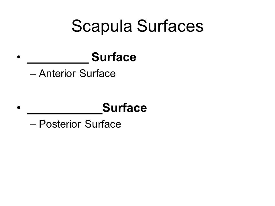 Scapula Surfaces _________ Surface –Anterior Surface ___________Surface –Posterior Surface
