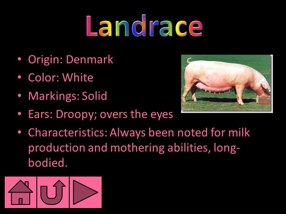 Origin: Denmark Color: White Markings: Solid Ears: Droopy; overs the eyes Characteristics: Always been noted for milk production and mothering abiliti