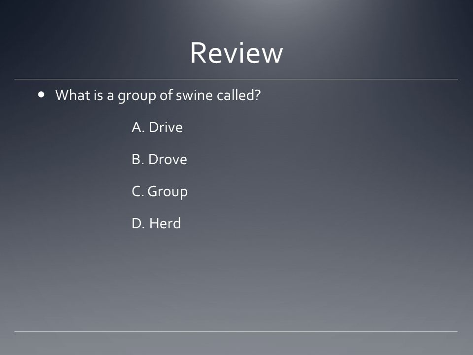 Review What is a group of swine called? A. Drive B. Drove C. Group D. Herd