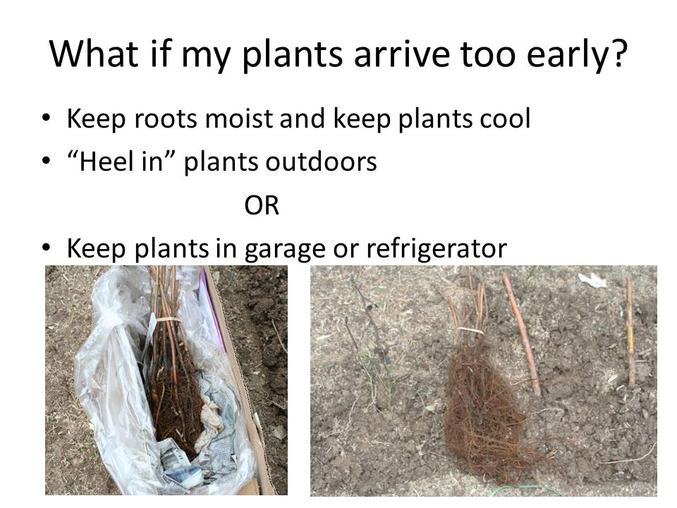 Root containment and root pruning will promote fruiting.