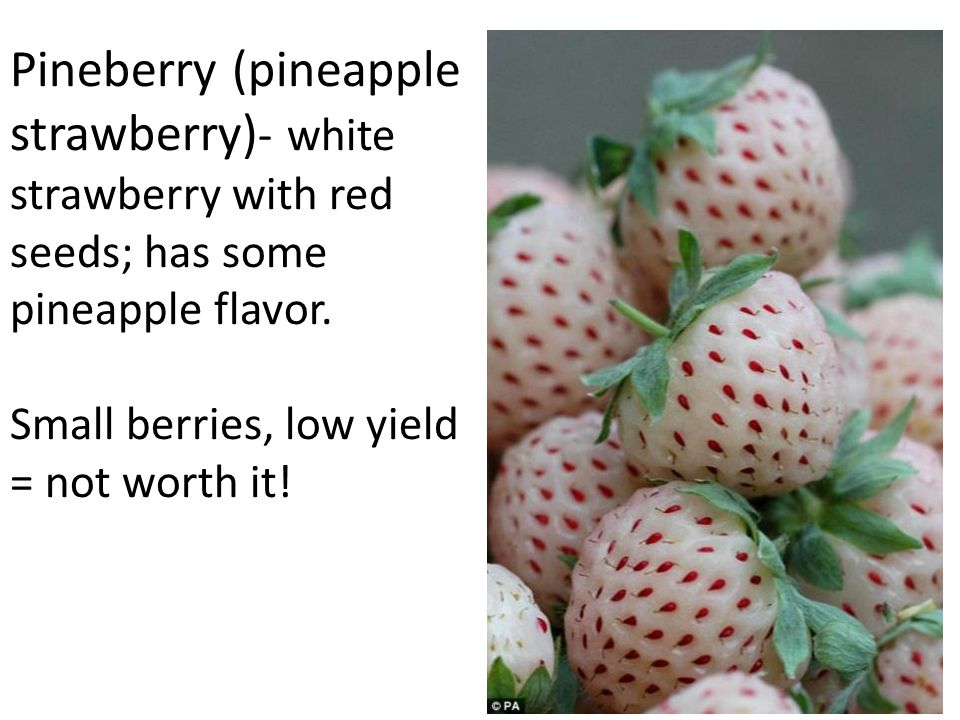 Pineberry (pineapple strawberry) - white strawberry with red seeds; has some pineapple flavor.