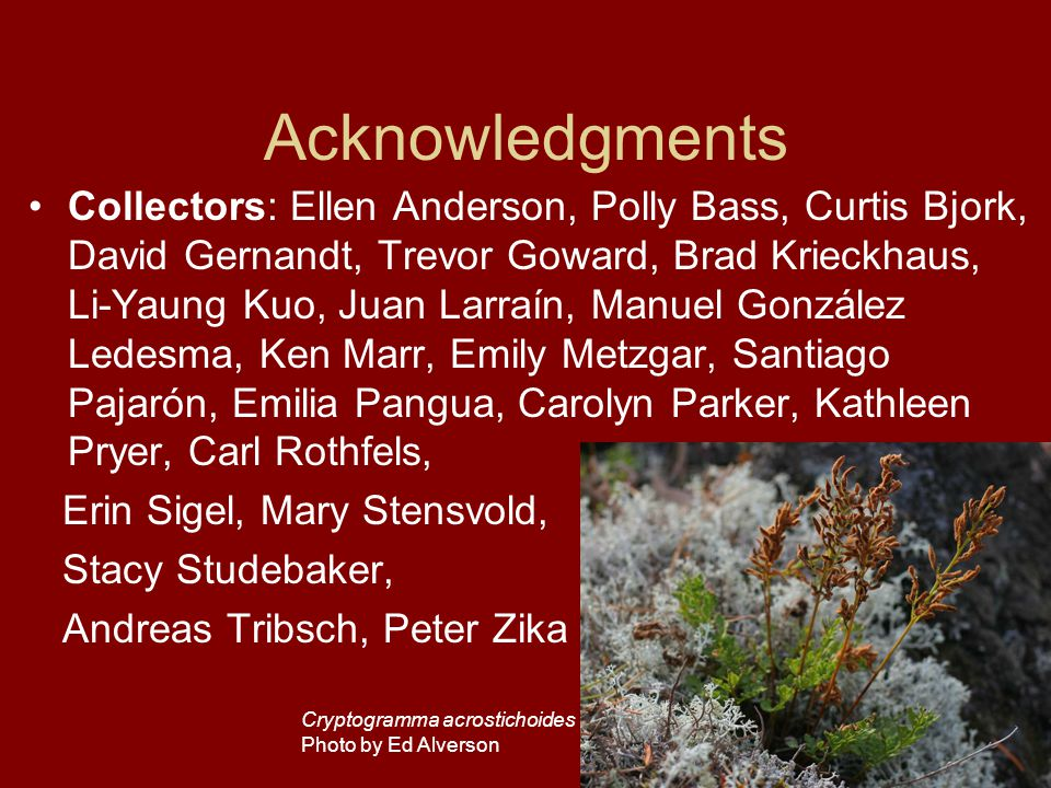 Acknowledgments Collectors: Ellen Anderson, Polly Bass, Curtis Bjork, David Gernandt, Trevor Goward, Brad Krieckhaus, Li-Yaung Kuo, Juan Larraín, Manuel González Ledesma, Ken Marr, Emily Metzgar, Santiago Pajarón, Emilia Pangua, Carolyn Parker, Kathleen Pryer, Carl Rothfels, Erin Sigel, Mary Stensvold, Stacy Studebaker, Andreas Tribsch, Peter Zika Cryptogramma acrostichoides Photo by Ed Alverson