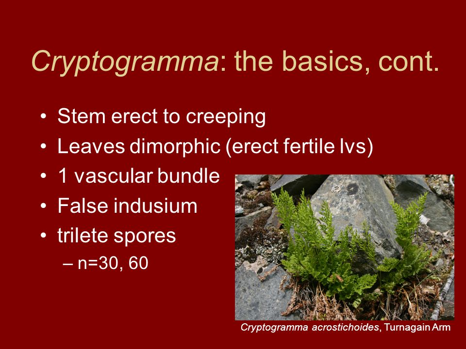 Cryptogramma: the basics, cont.