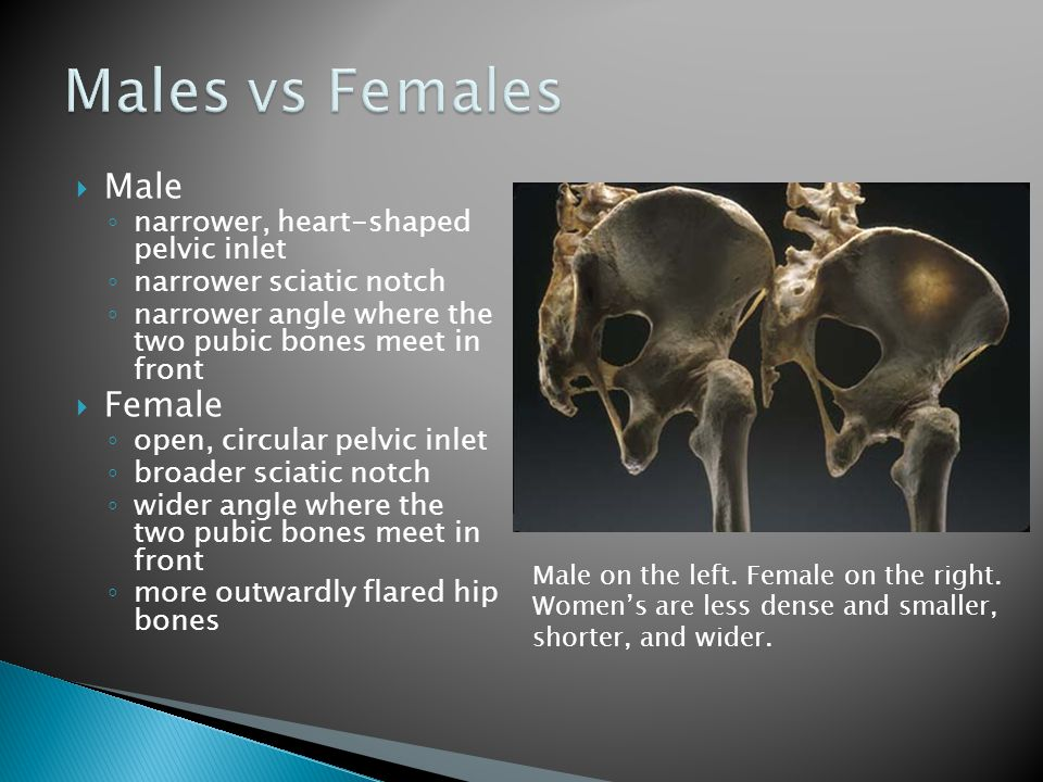  Male ◦ narrower, heart-shaped pelvic inlet ◦ narrower sciatic notch ◦ narrower angle where the two pubic bones meet in front  Female ◦ open, circul