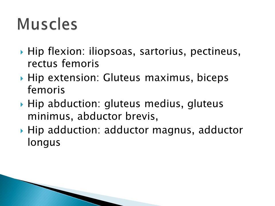  Hip flexion: iliopsoas, sartorius, pectineus, rectus femoris  Hip extension: Gluteus maximus, biceps femoris  Hip abduction: gluteus medius, glute