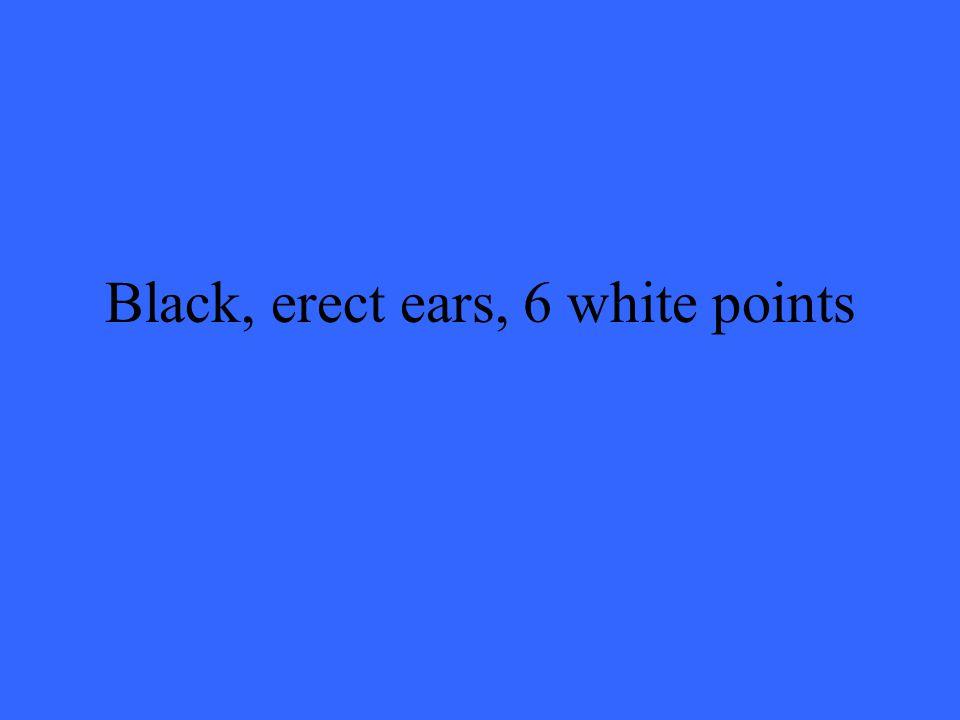 Black, erect ears, 6 white points