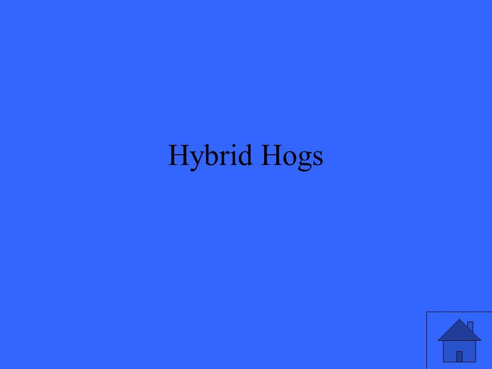 Hybrid Hogs
