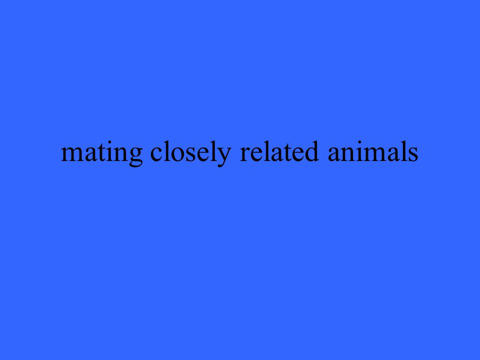 mating closely related animals