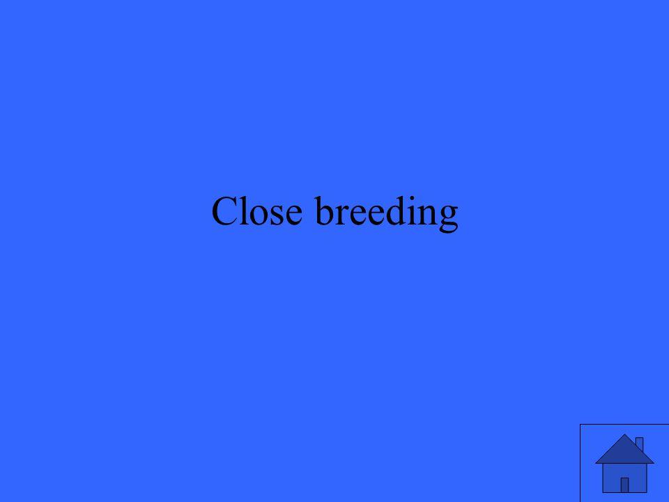 Close breeding