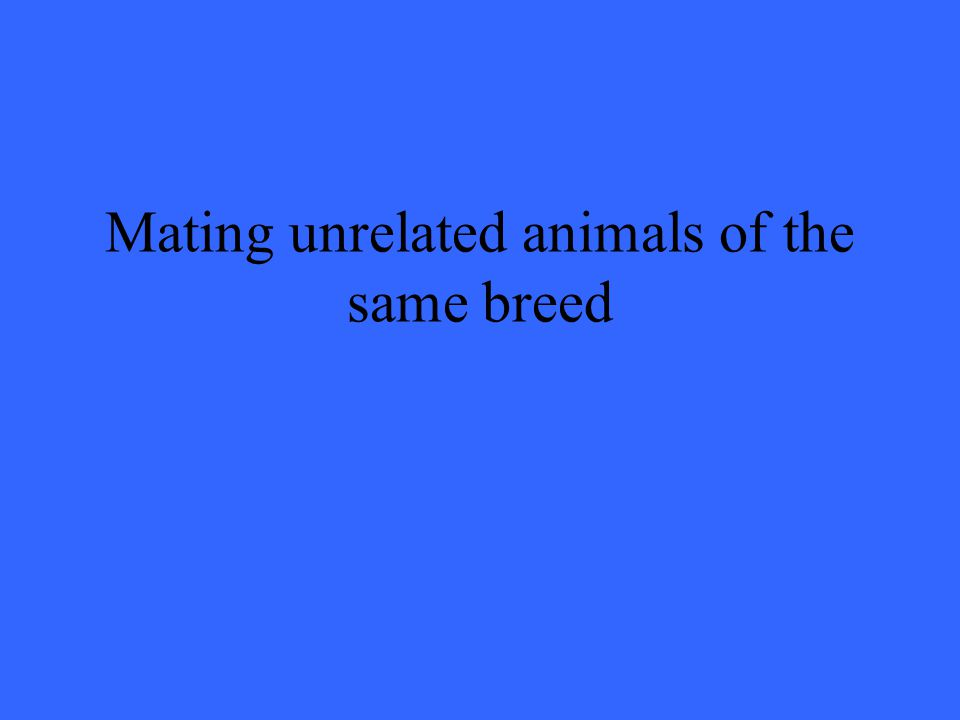 Mating unrelated animals of the same breed