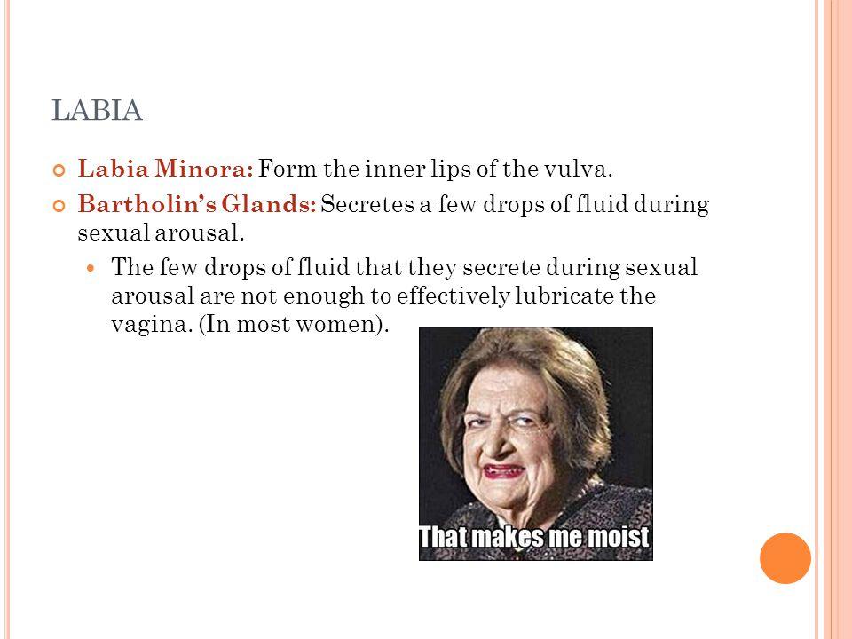 LABIA Labia Minora: Form the inner lips of the vulva.
