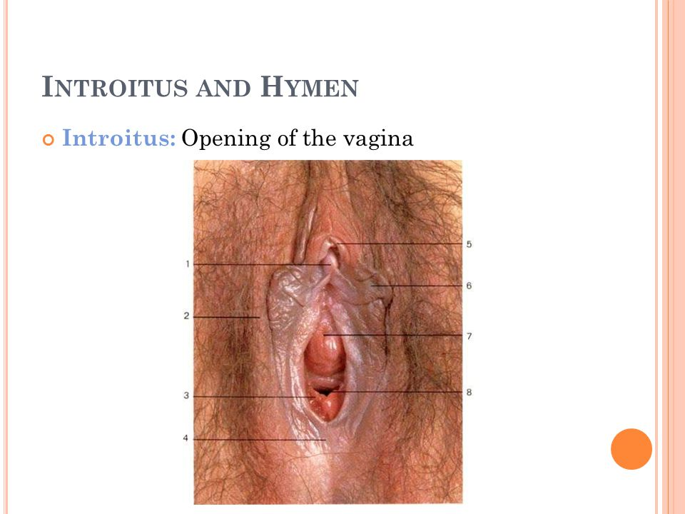 I NTROITUS AND H YMEN Introitus: Opening of the vagina