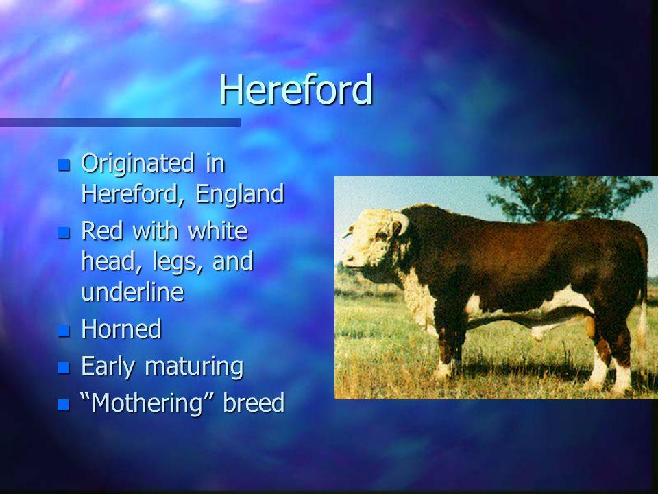 Hereford n Originated n Originated in Hereford, England n Red n Red with white head, legs, and underline n Horned n Early n Early maturing n Mothering n Mothering breed