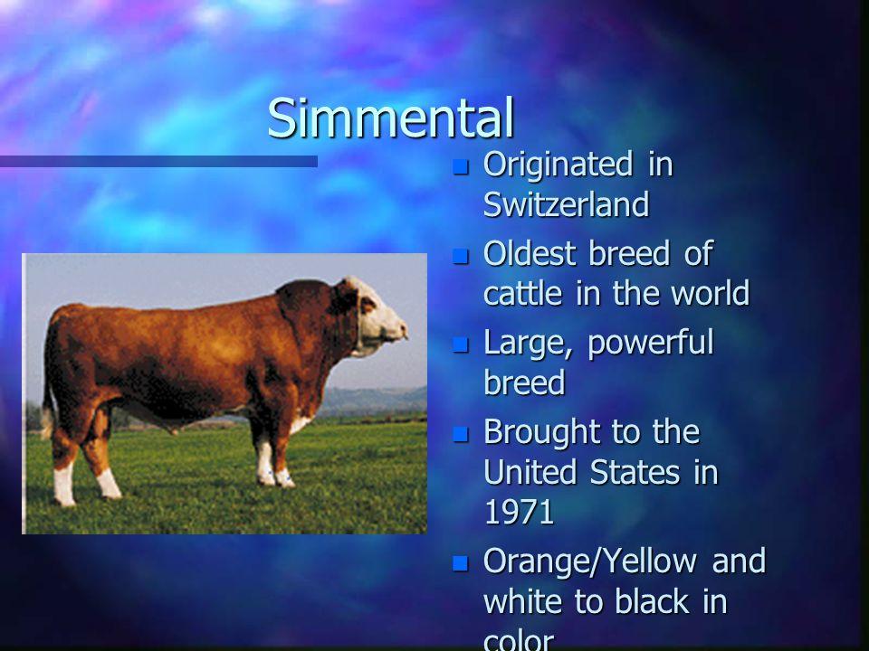 Guernsey n Milk high in betacarotene n Developed off coast of France