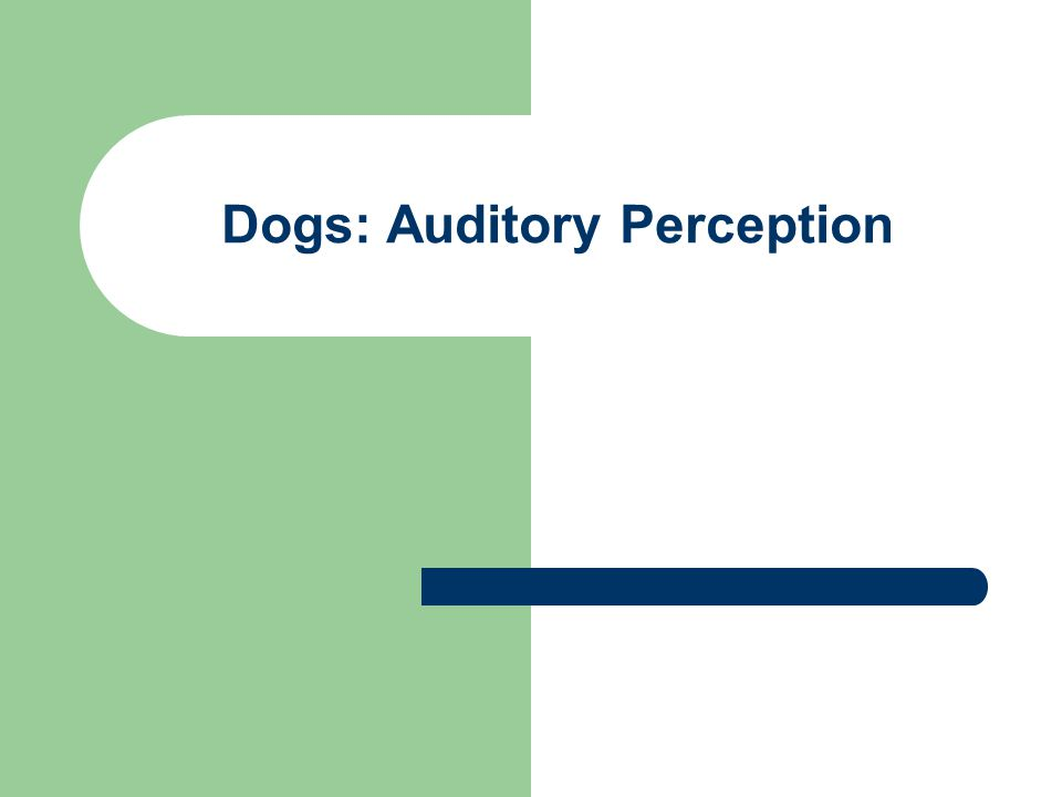 Dogs: Auditory Perception