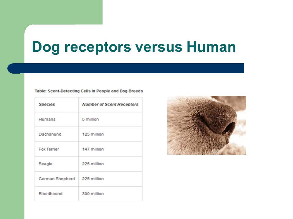 Dog receptors versus Human