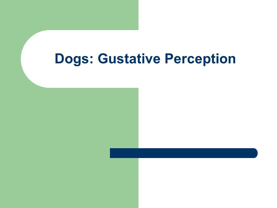Dogs: Gustative Perception