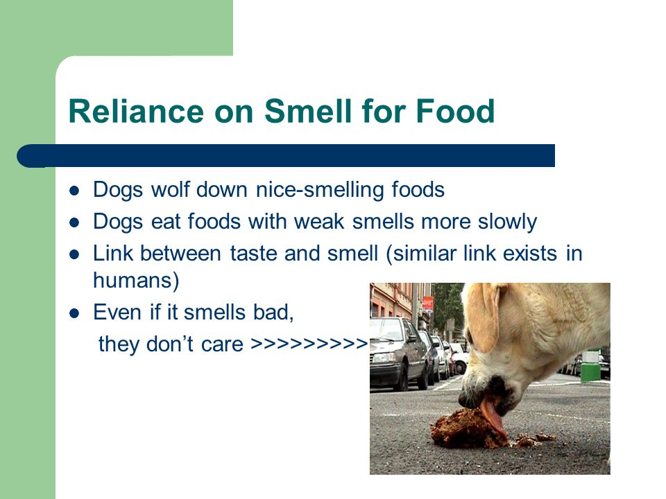 Reliance on Smell for Food Dogs wolf down nice-smelling foods Dogs eat foods with weak smells more slowly Link between taste and smell (similar link exists in humans) Even if it smells bad, they don't care >>>>>>>>>