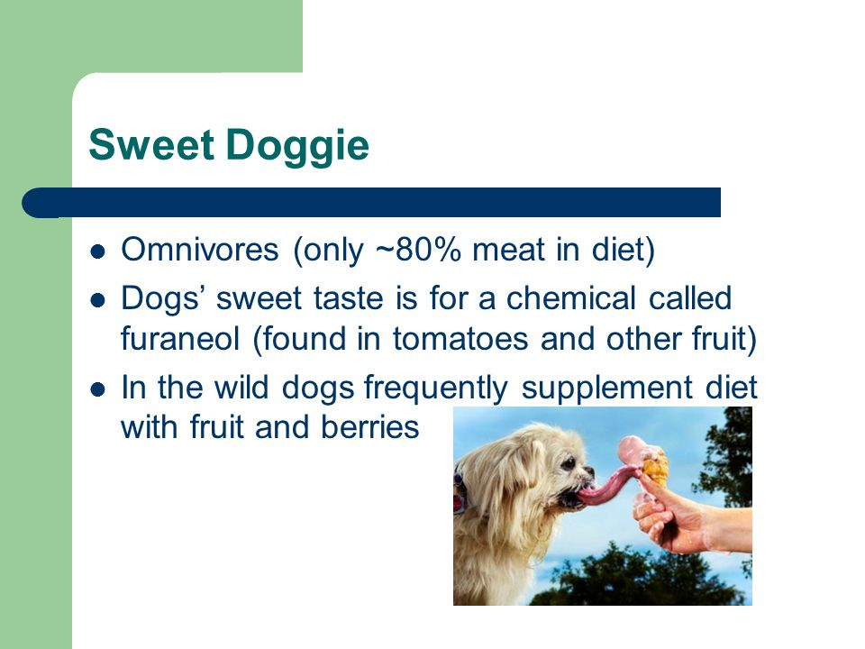 Sweet Doggie Omnivores (only ~80% meat in diet) Dogs' sweet taste is for a chemical called furaneol (found in tomatoes and other fruit) In the wild dogs frequently supplement diet with fruit and berries