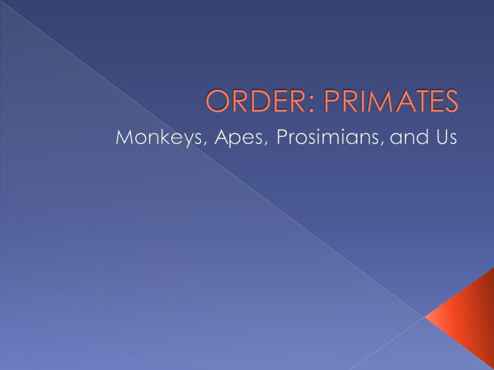 The most basic groups to think about:  Prosimians  Monkeys  Apes and humans