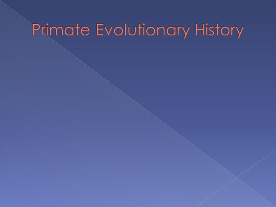  The origin of the order is commonly given as 65 MYA (million years ago)  Some estimates go back to 85 MYA