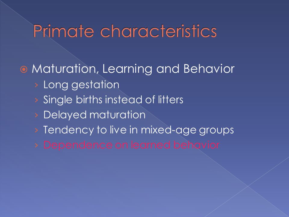  Maturation, Learning and Behavior › Long gestation › Single births instead of litters › Delayed maturation › Tendency to live in mixed-age groups › Dependence on learned behavior