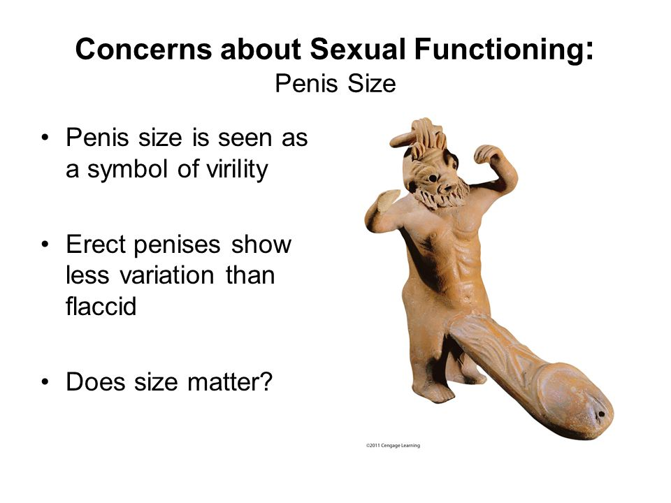 Concerns about Sexual Functioning : Penis Size Penis size is seen as a symbol of virility Erect penises show less variation than flaccid Does size matter?