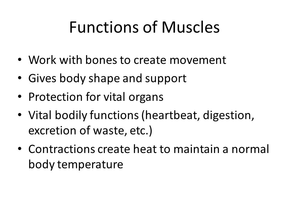 Functions of Muscles Work with bones to create movement Gives body shape and support Protection for vital organs Vital bodily functions (heartbeat, di