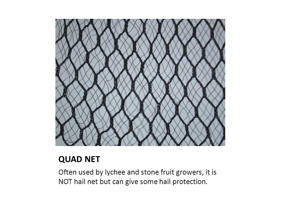 QUAD NET Often used by lychee and stone fruit growers, it is NOT hail net but can give some hail protection.