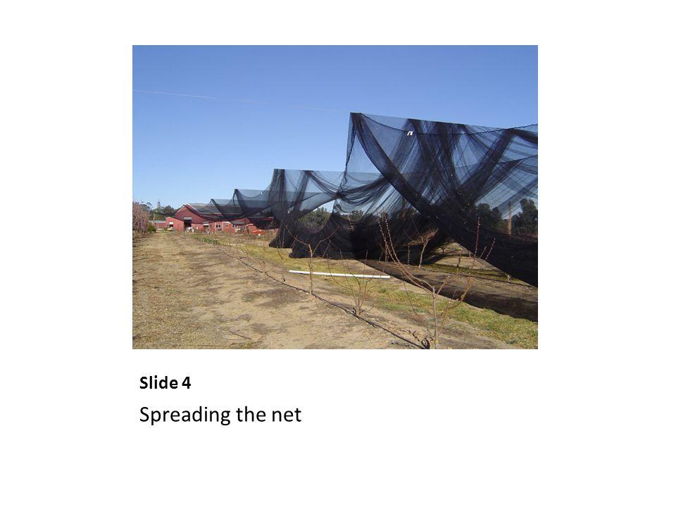 Slide 4 Spreading the net