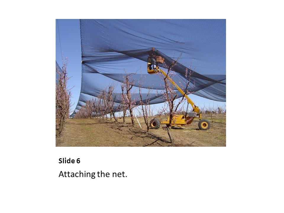 Slide 6 Attaching the net.