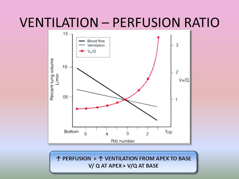 VENTILATION – PERFUSION RATIO ↑ PERFUSION > ↑ VENTILATION FROM APEX TO BASE V/ Q AT APEX > V/Q AT BASE ↑ PERFUSION > ↑ VENTILATION FROM APEX TO BASE V/ Q AT APEX > V/Q AT BASE
