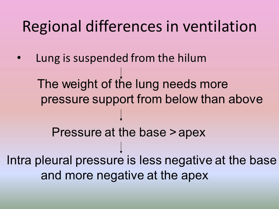 Regional differences in ventilation Lung is suspended from the hilum The weight of the lung needs more pressure support from below than above Pressure