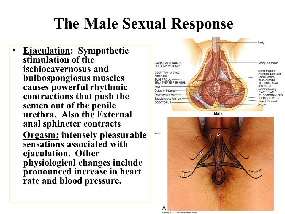 anal orgasm for men