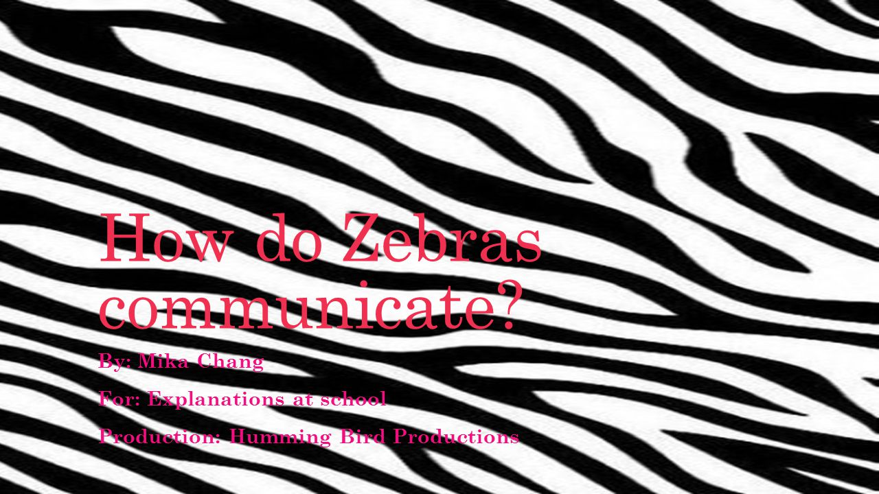 How do Zebras communicate.