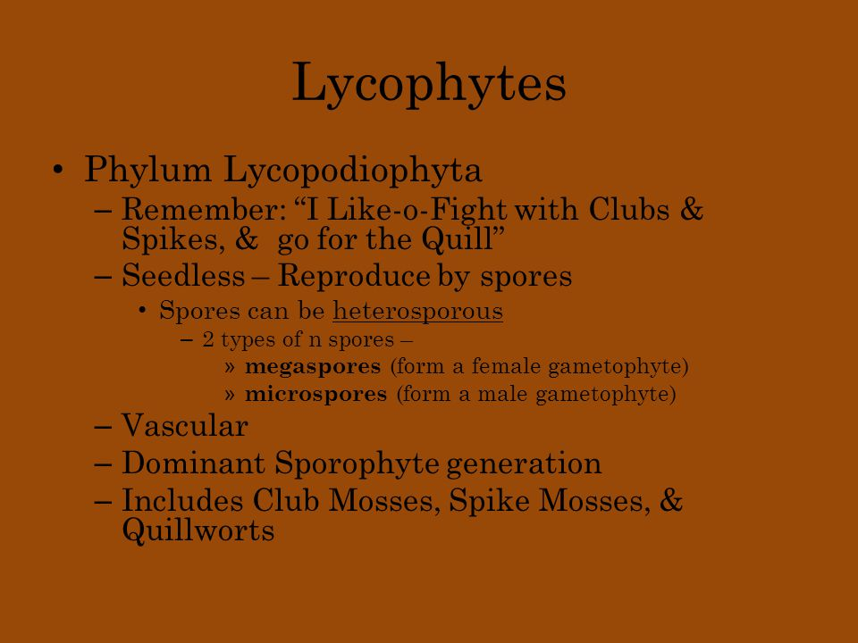 "Lycophytes Phylum Lycopodiophyta – Remember: ""I Like-o-Fight with Clubs & Spikes, & go for the Quill"" – Seedless – Reproduce by spores Spores can be h"
