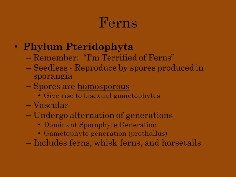 "Ferns Phylum Pteridophyta – Remember: ""I'm Terrified of Ferns"" – Seedless - Reproduce by spores produced in sporangia – Spores are homosporous Give ri"